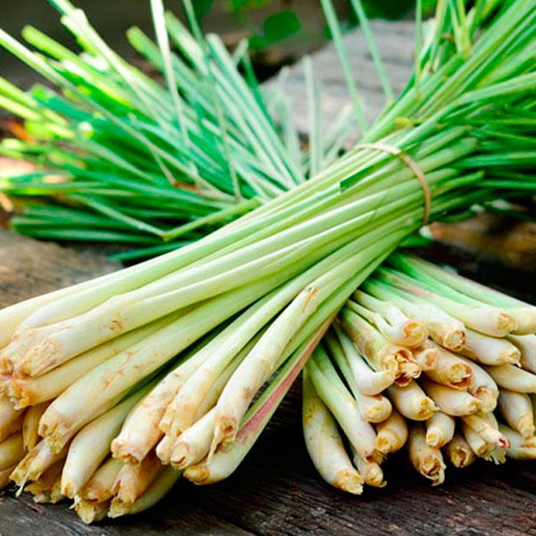 lemongrass aceite esencial