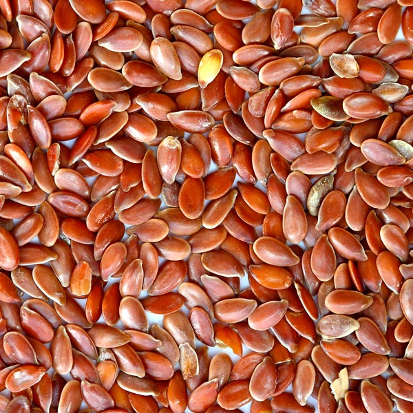 lino aceite vegetal