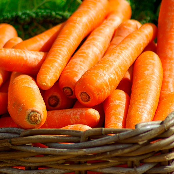 zanahoria aceite vegetal