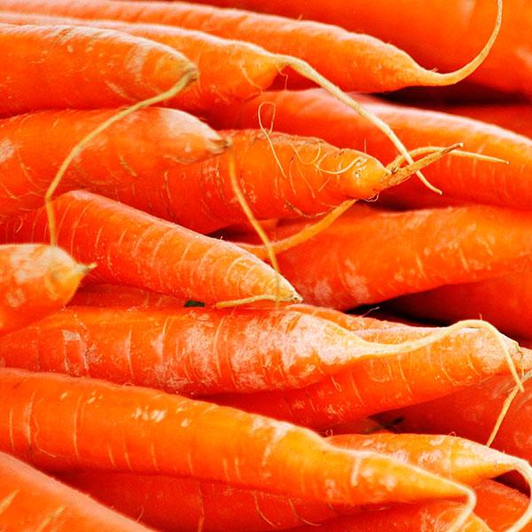 zanahoria aceite esencial