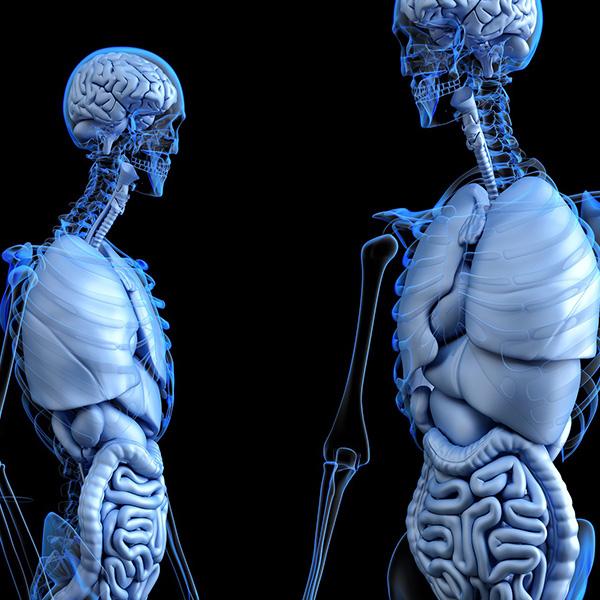 Cerebro / Sistema nervioso
