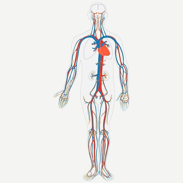 Presión arterial / Tensión